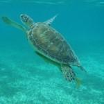 tortugas at reach