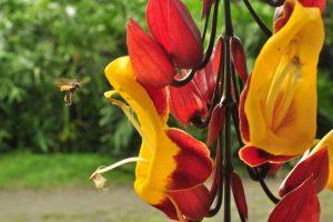 Manizales Fauna Flora v okoli cafka plantage