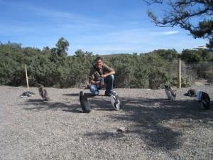 Punta Tombo Argentina