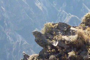 Chivay & Cruz del Condor – Arequipa Region