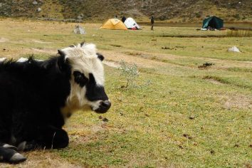 Santa Cruz trek – Camping