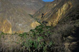 Colca Canyon Panoramas